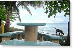 Dog By The Beach In Rincon Acrylic Print