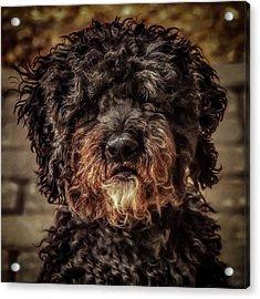 Dog  Acrylic Print