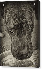 Dog Days Acrylic Print by Off The Beaten Path Photography - Andrew Alexander
