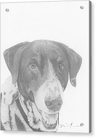 Dog Drawing Orion Acrylic Print