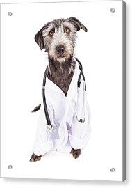 Dog Dressed As Veterinarian Acrylic Print