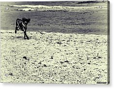 Dog Frolicking On A Beach Acrylic Print by Ken Morris