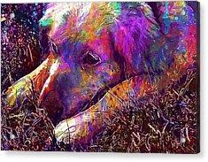 Dog Head Lazy Dog Animal Pet  Acrylic Print