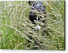 Dog Hiding In The Grass Acrylic Print by Pelo Blanco Photo