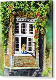 Dog In The Window Acrylic Print