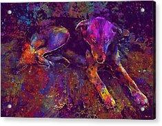 Dog Lazy Country Sleepy Pet  Acrylic Print