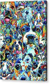 Dog Lovers Delight - Sharon Cummings Acrylic Print by Sharon Cummings