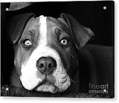 Dog - Monochrome 2 Acrylic Print
