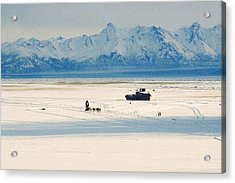 Dog Musher At Cook Inlet - Alaska Acrylic Print by Juergen Weiss