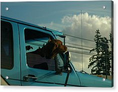 Dog Of A Day Acrylic Print by Robert Evans