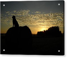 Dog On Hay Greeting Sunrise Acrylic Print