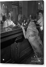 Dog Ordering A Beer Acrylic Print by The Harrington Collection