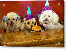 Dog Party Acrylic Print