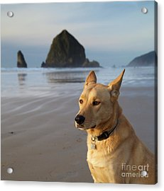 Dog Portrait @ Cannon Beach Acrylic Print