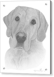 Dog Portrait Webster Acrylic Print
