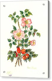 Dog Rose Acrylic Print by Nell Hill