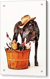 Acrylic Print featuring the photograph Dog Sitter by Susan Stone