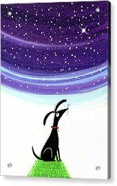 Dog Star  Acrylic Print