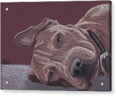 Dog Tired Acrylic Print by Stacey Jasmin
