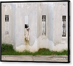 Dog Watching Acrylic Print
