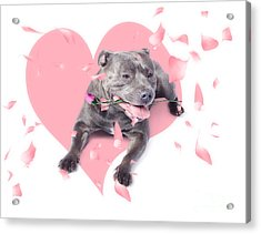 Dog With Pink Rose On Heart Shape Background Acrylic Print by Jorgo Photography - Wall Art Gallery