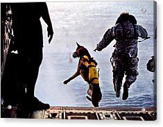 Military Working Dog Acrylic Print