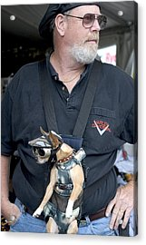 Doggie Biker Acrylic Print