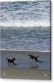 Acrylic Print featuring the photograph Doggie Fun by Nareeta Martin