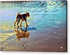 Doggone Beachy Day Acrylic Print
