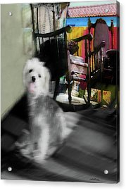 Dogie In The Patio Art  Acrylic Print