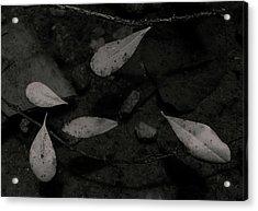 Foglie Morte Acrylic Print