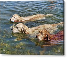 Dogs Are People Too Acrylic Print