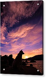 Dogs Dream Too  Acrylic Print