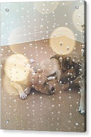 Dogs' Bath Time Gazes Acrylic Print by Becky Burt