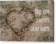 Dogs Leave Pawprints Acrylic Print by Robyn Stacey