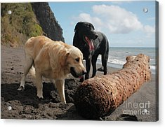 Dogs Playing At The Beach Acrylic Print
