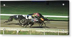 Dogs Racing Acrylic Print by Tom Conway