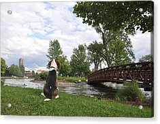 Dog's View Acrylic Print