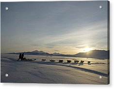 Dogsledge, Northern Greenland Acrylic Print