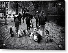 Dog Walking Acrylic Print by Jessica Jenney