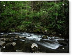 Acrylic Print featuring the photograph Dogwood Along The River by Mike Eingle