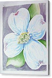Dogwood Bloom Acrylic Print by Loretta Nash
