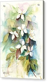 Acrylic Print featuring the painting Dogwood Branch by Sandra Strohschein