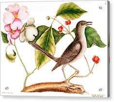 Dogwood  Cornus Florida, And Mocking Bird  Acrylic Print