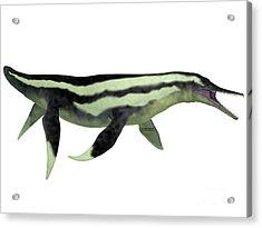 Dolichorhynchops Plesiosaur On White Acrylic Print by Corey Ford