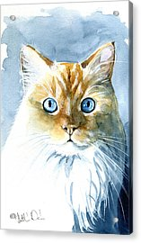 Doll Face Flame Point Himalayan Cat Painting Acrylic Print