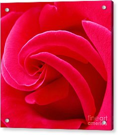 Dolly Parton's Red Rose Acrylic Print