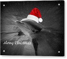 Dolphin Christmas Acrylic Print by Amanda Eberly-Kudamik