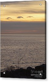 Dolphin Cloud Sunset Acrylic Print by Tannis Baldwin