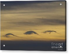 Dolphin Clouds Acrylic Print by Tannis Baldwin